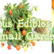 5 Gorgeous Edibles for your Small Garden